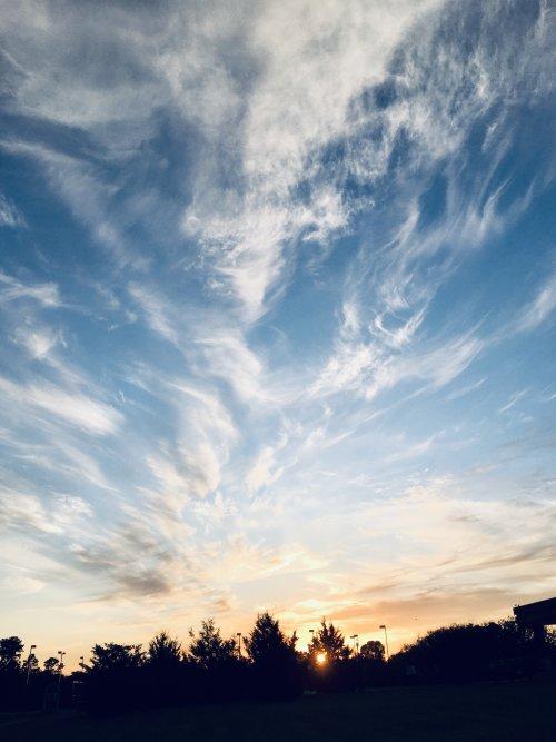 蔡楚:UWA校园的黄昏(手机拍摄)