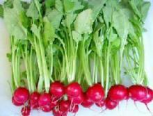 蔡楚:我家的秋播蔬菜