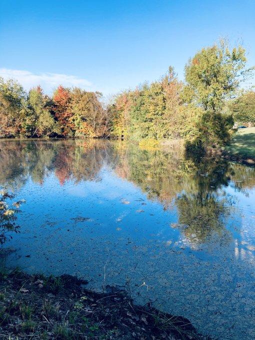 蔡楚:11月初的芦湖(多图)